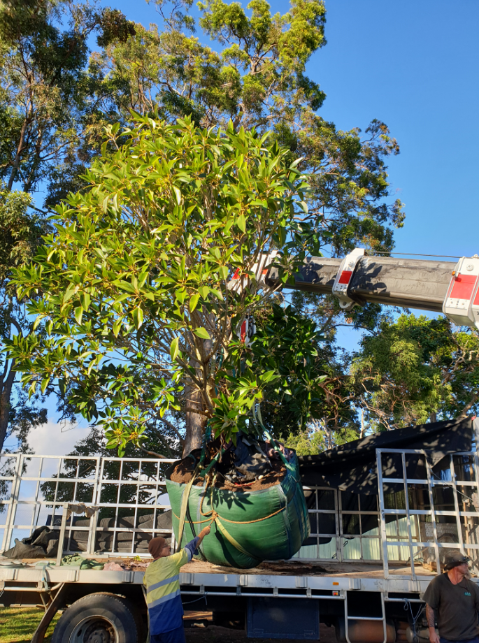 Tree Planting - Craning the tree off the truck