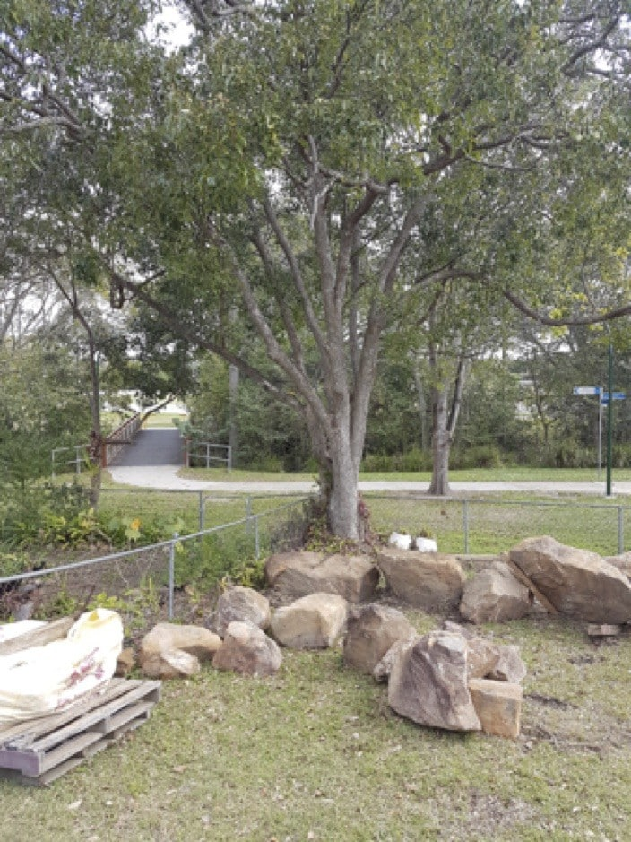 Brisbane S Top 10 Worst Weedy And Undesirable Trees To