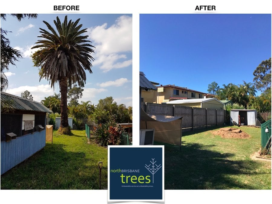 canary island date palm tree removal before and after shot