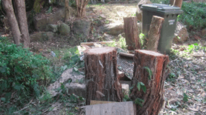 cheese tree stumps