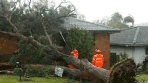 damaged house tree