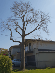 medium tree removal brisbane