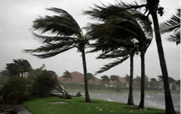 stormy winds palm trees