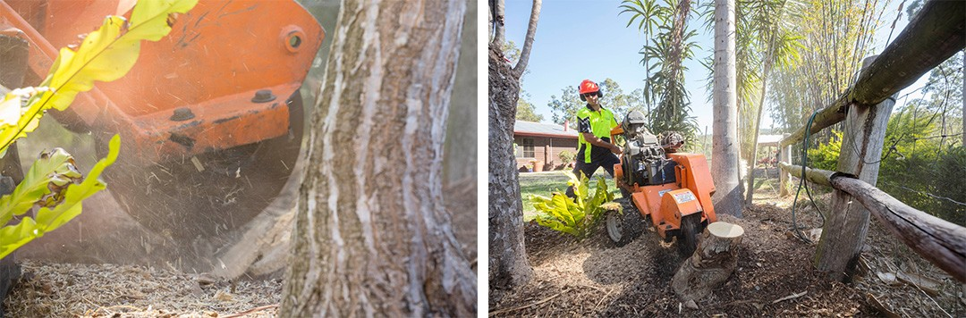 brisbane stump grinding in action