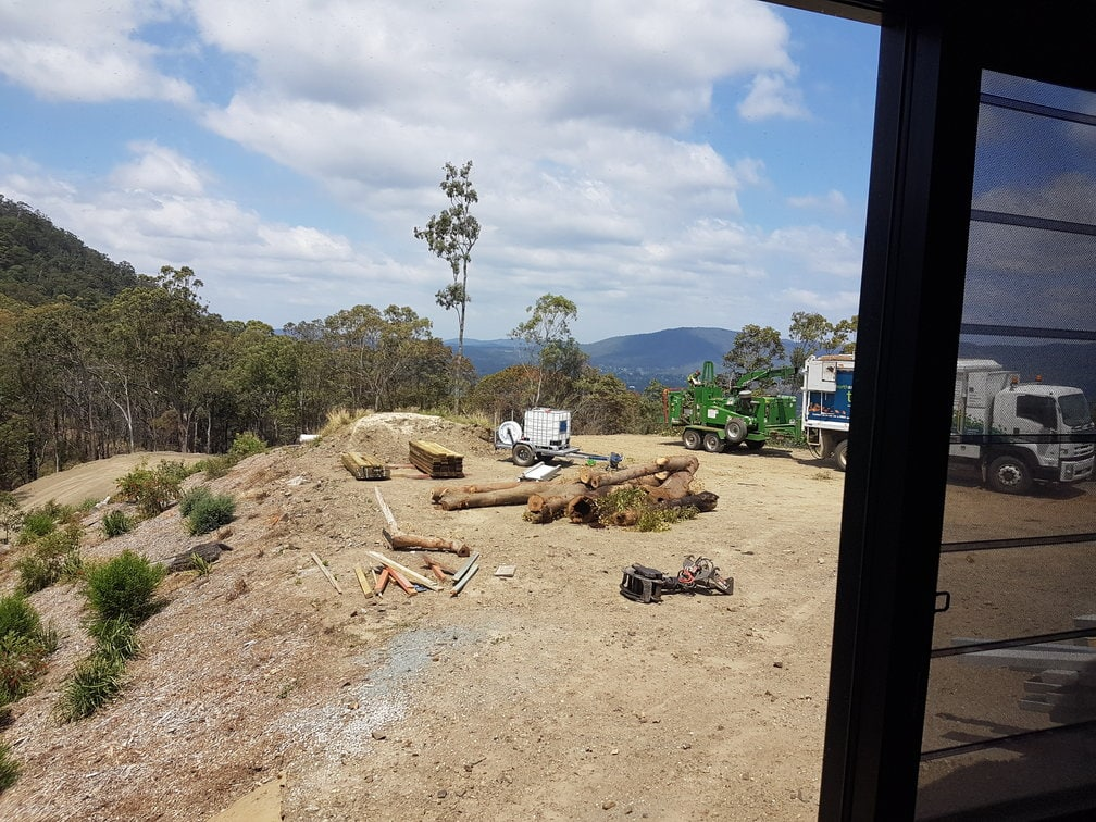 removal of tallowwood trees after